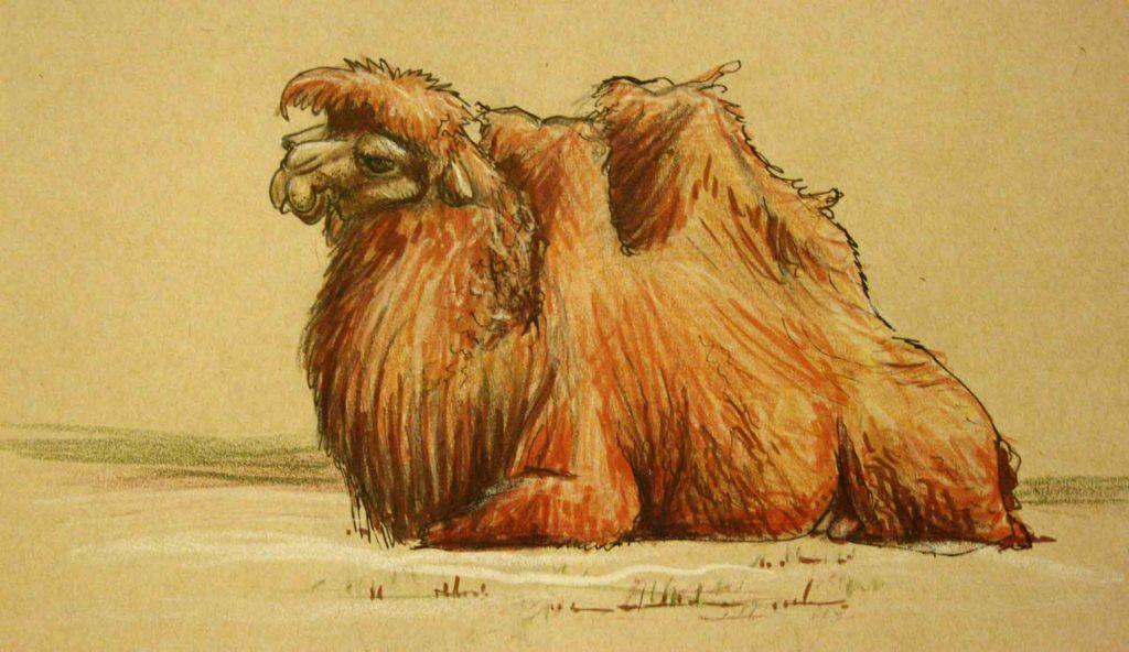 Camello descansando para imprimir