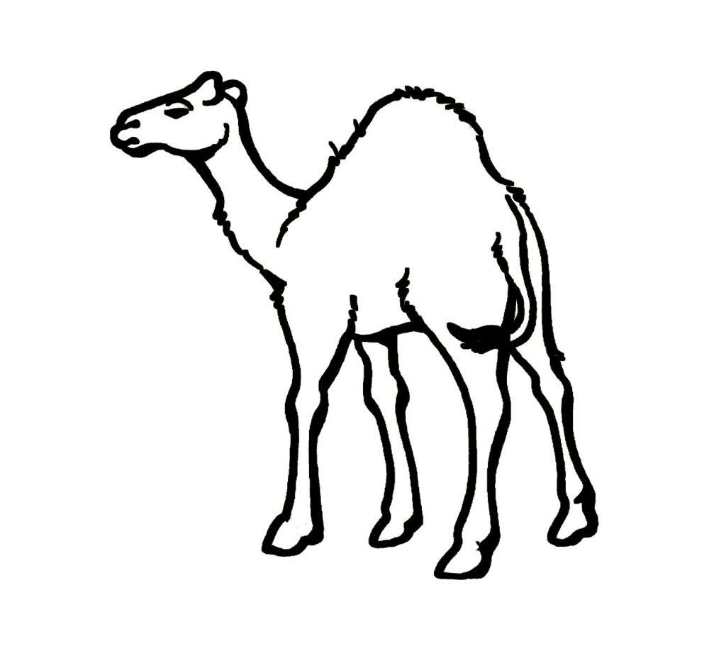 Dibujo de Camello para colorear fácil