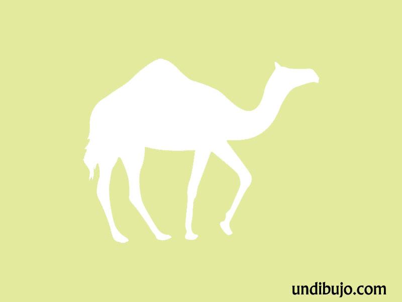 Silueta de un camello para pintar