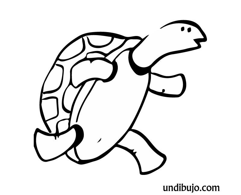 Dibujo de Tortuga corriendo para colorear