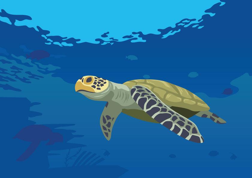 Dibujo de Tortuga maritima adulta
