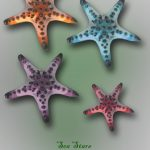 Estrellas de Mar coloridas