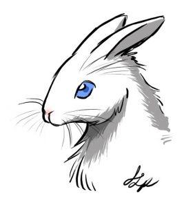 cabeza de conejo para colorear